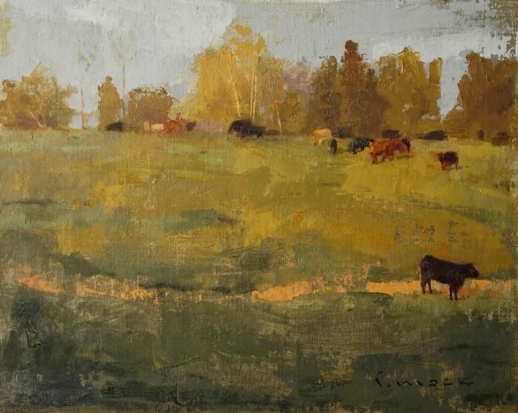 stokes co cows